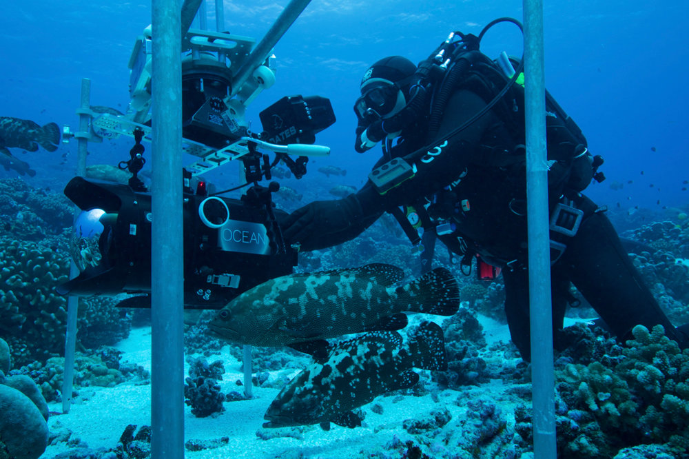 Shooting RED Dragon with underwater slider for 'BLUE PLANET 2 - REEF'