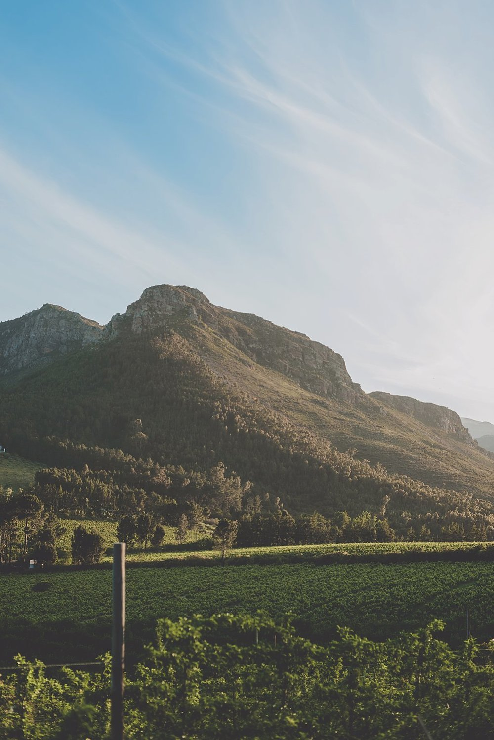 Angelique_Smith_Photography_Franschhoek_K&M-538.jpg