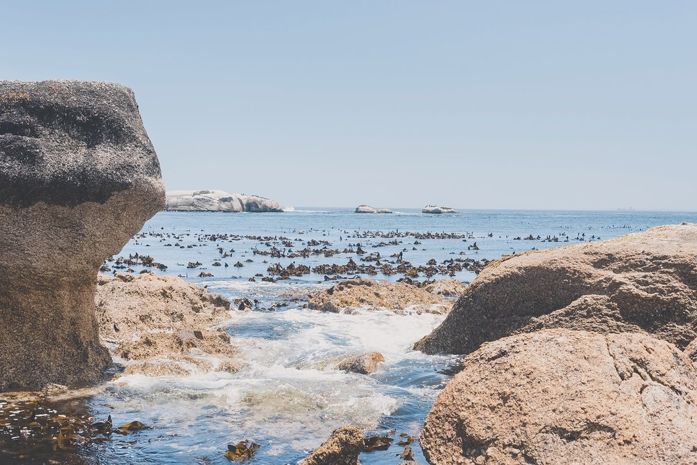 Angelique_Smith_Photography_Cape_Point_coupleshoot-126.jpg