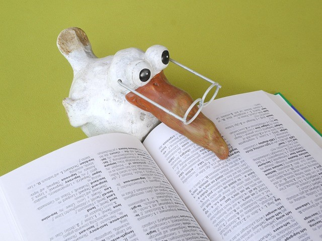 school bird reading book.jpg