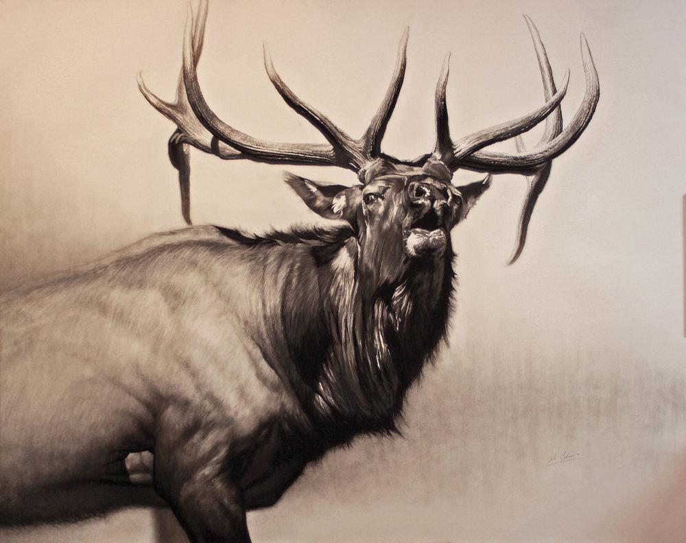 e Herd Bull    (final).jpg