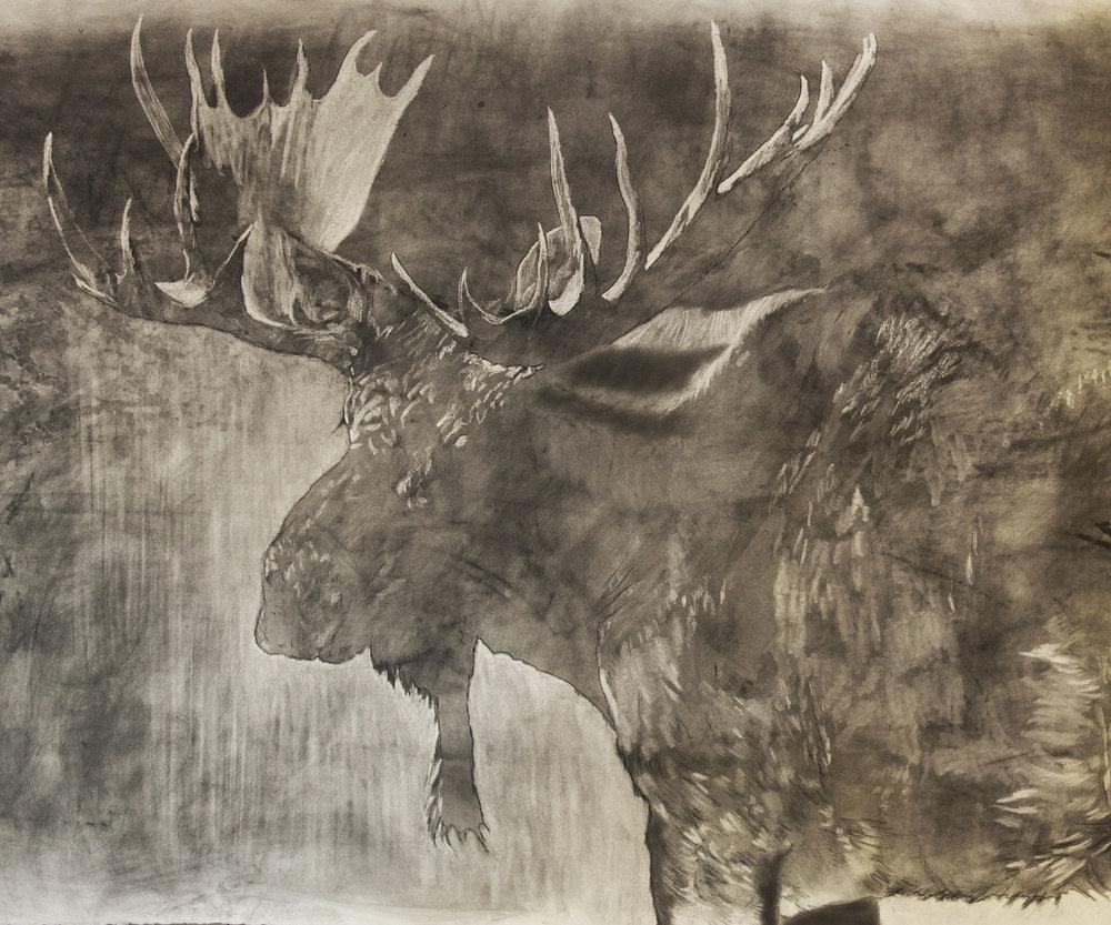e Moose in prog.jpg