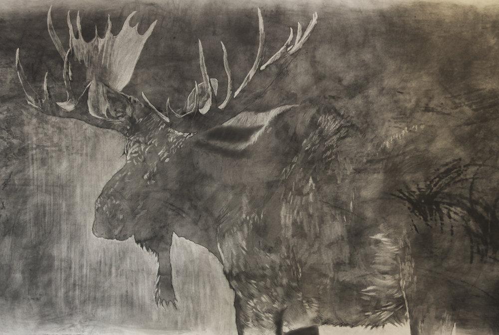 Moose in prog 2.jpg