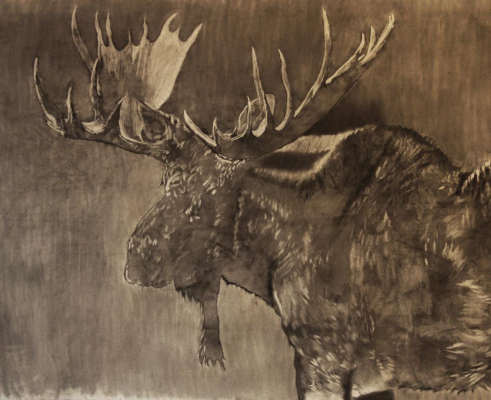 Moose in prog 3.jpg