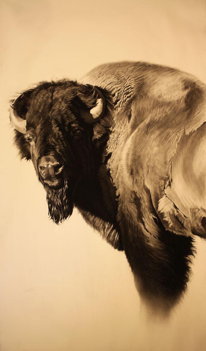 e Bison Study II..jpg