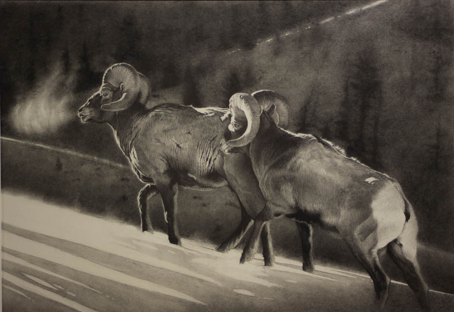 e High Country Bighorns.jpg