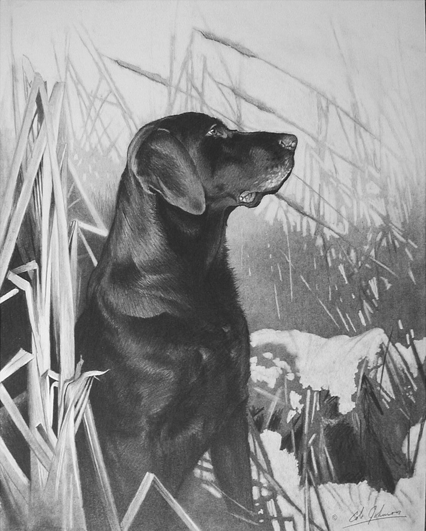 e Black Lab in the Cattails.jpg