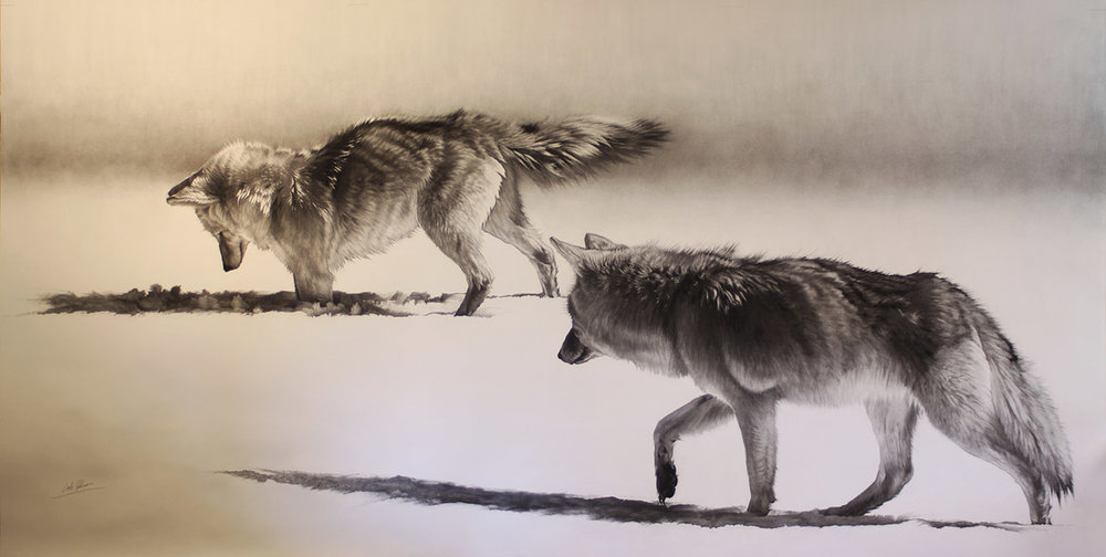 e Coyotes Hunting.jpg