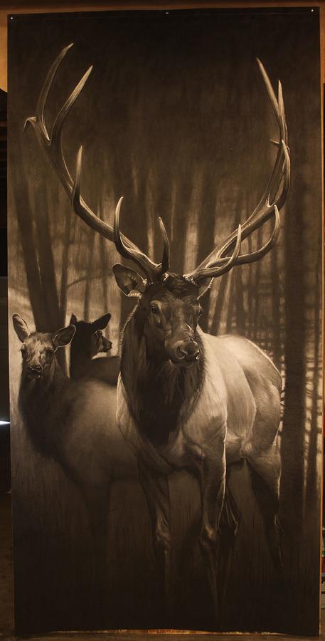 e Dark Timber.jpg