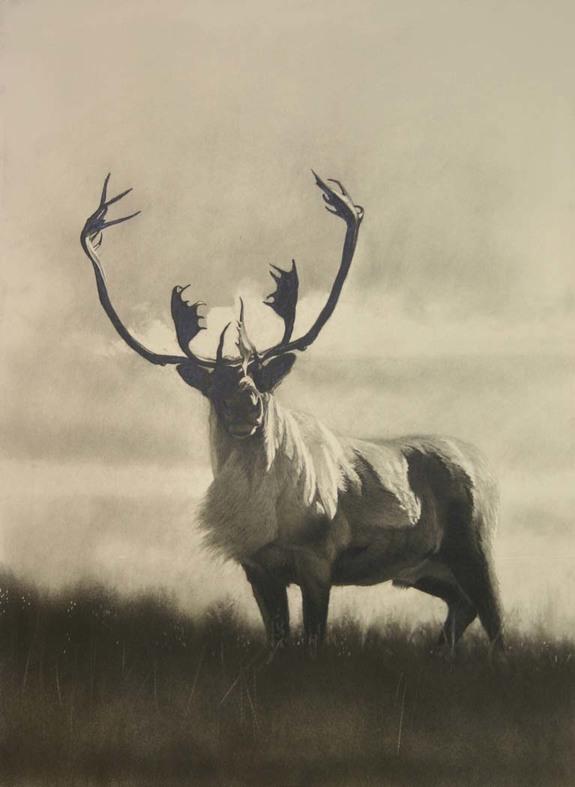 e Labradore Bull.jpg
