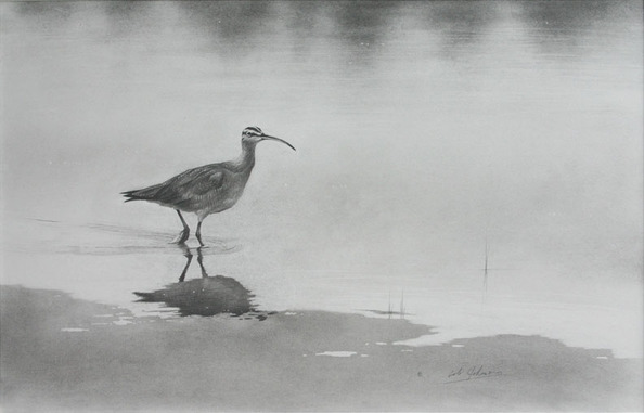 Email Whimbrel.jpg