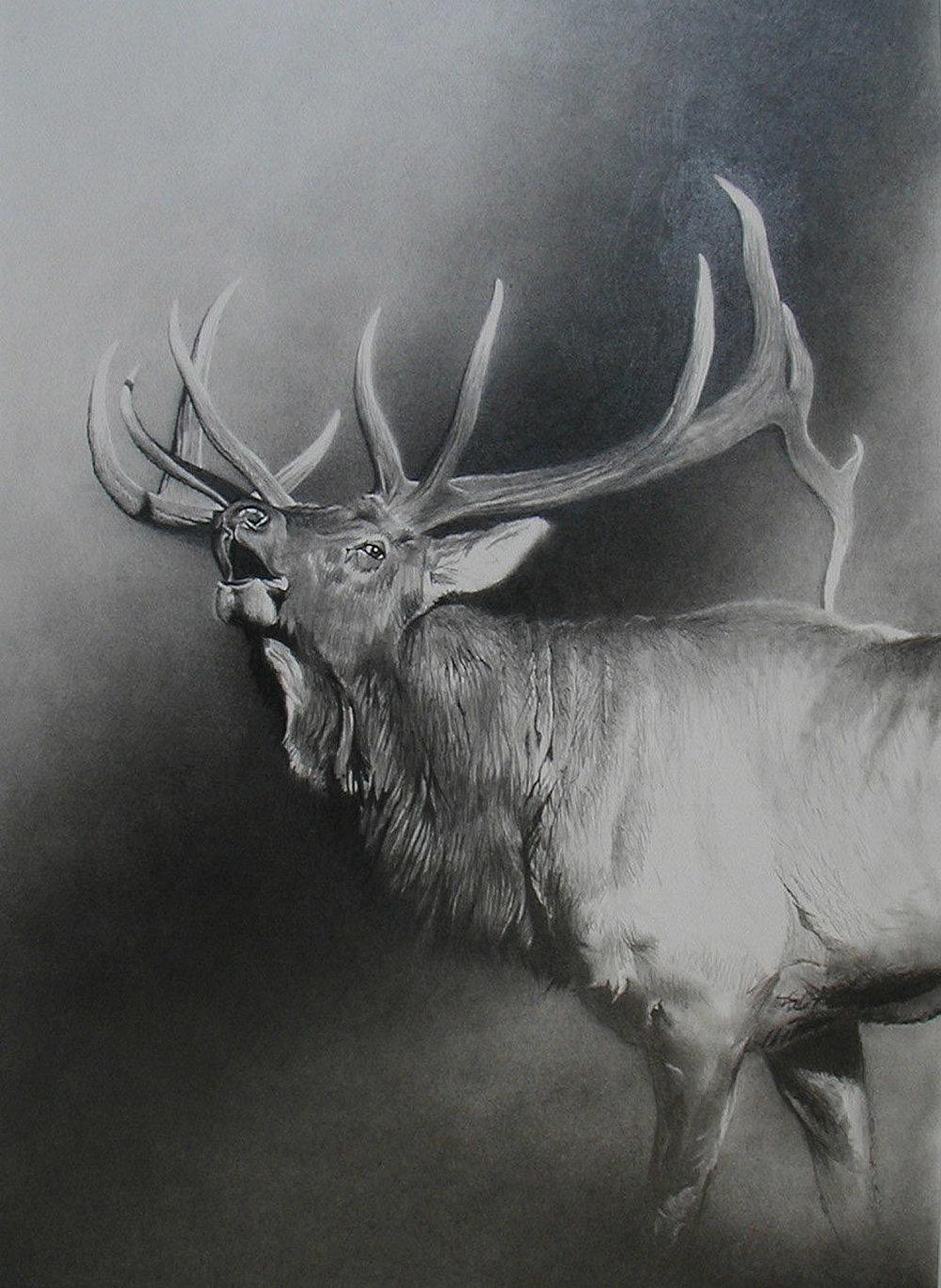 e Bull Elk.jpg