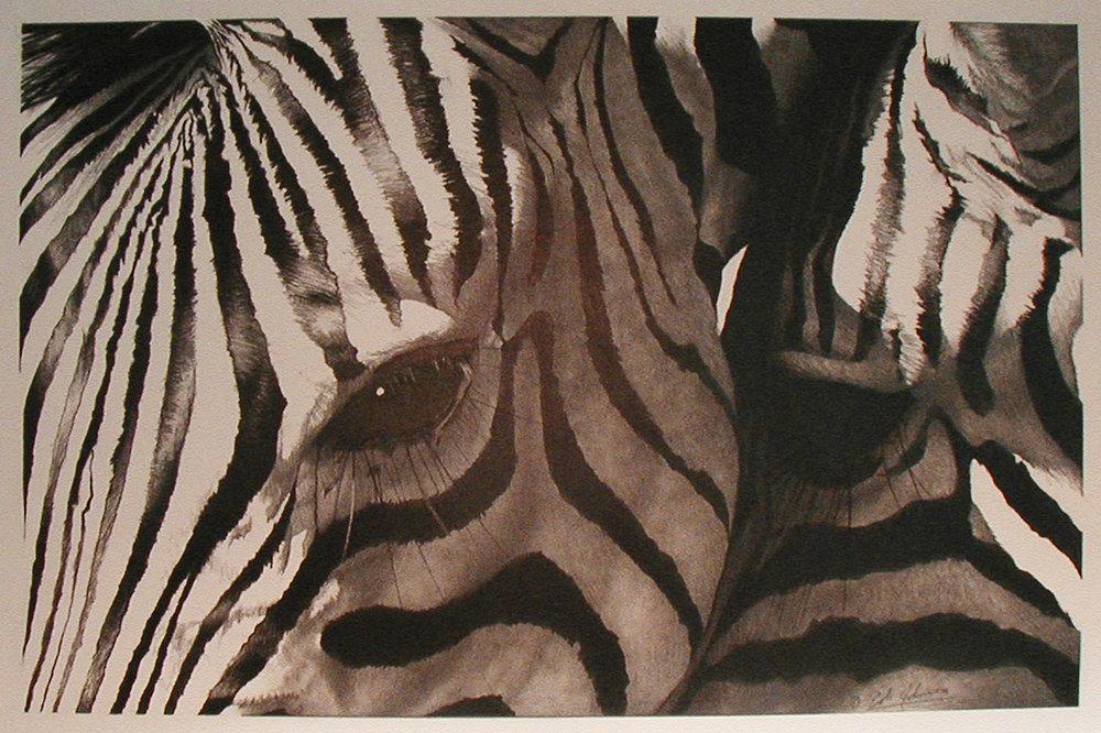 e Zebra.jpg