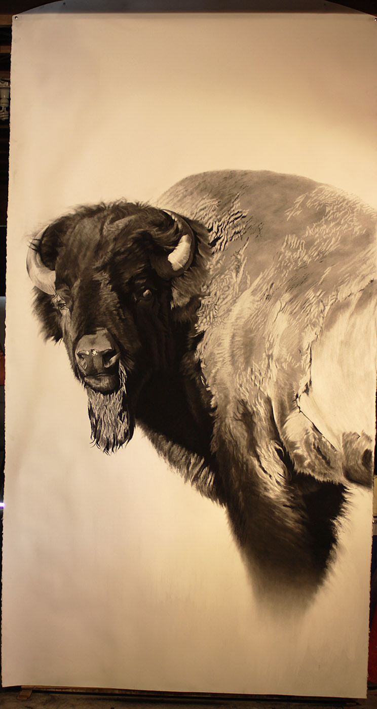 e 8ft Bison Study in process.jpg