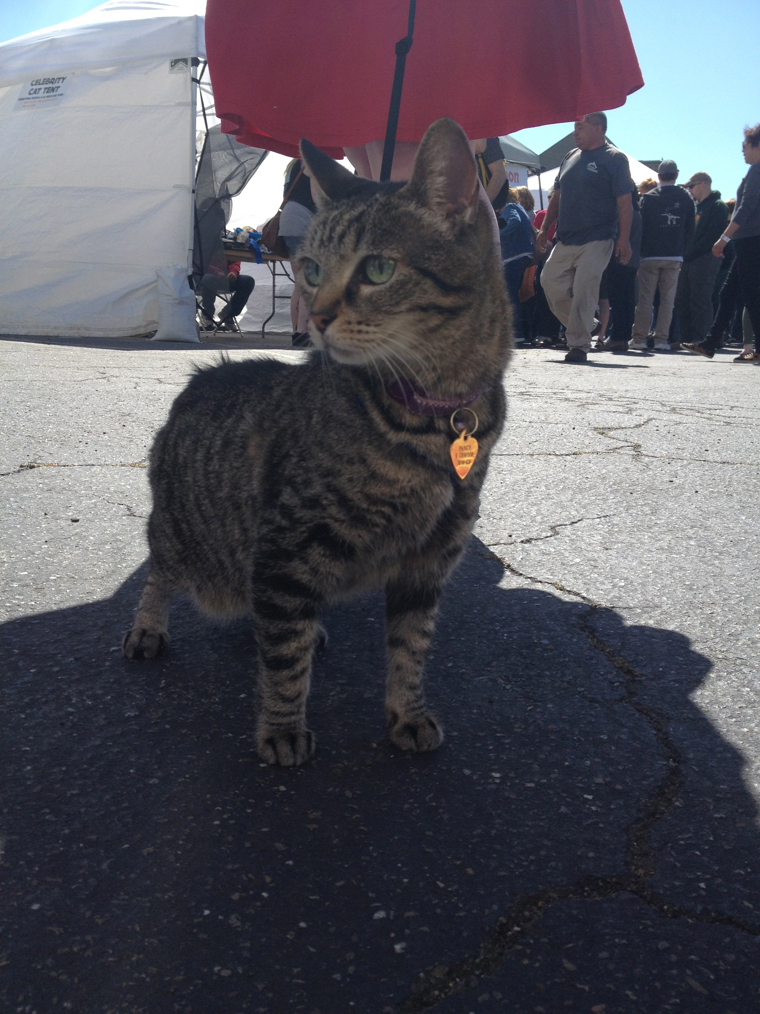 Oh, you best believe I went to the Oakland Cat Festival.