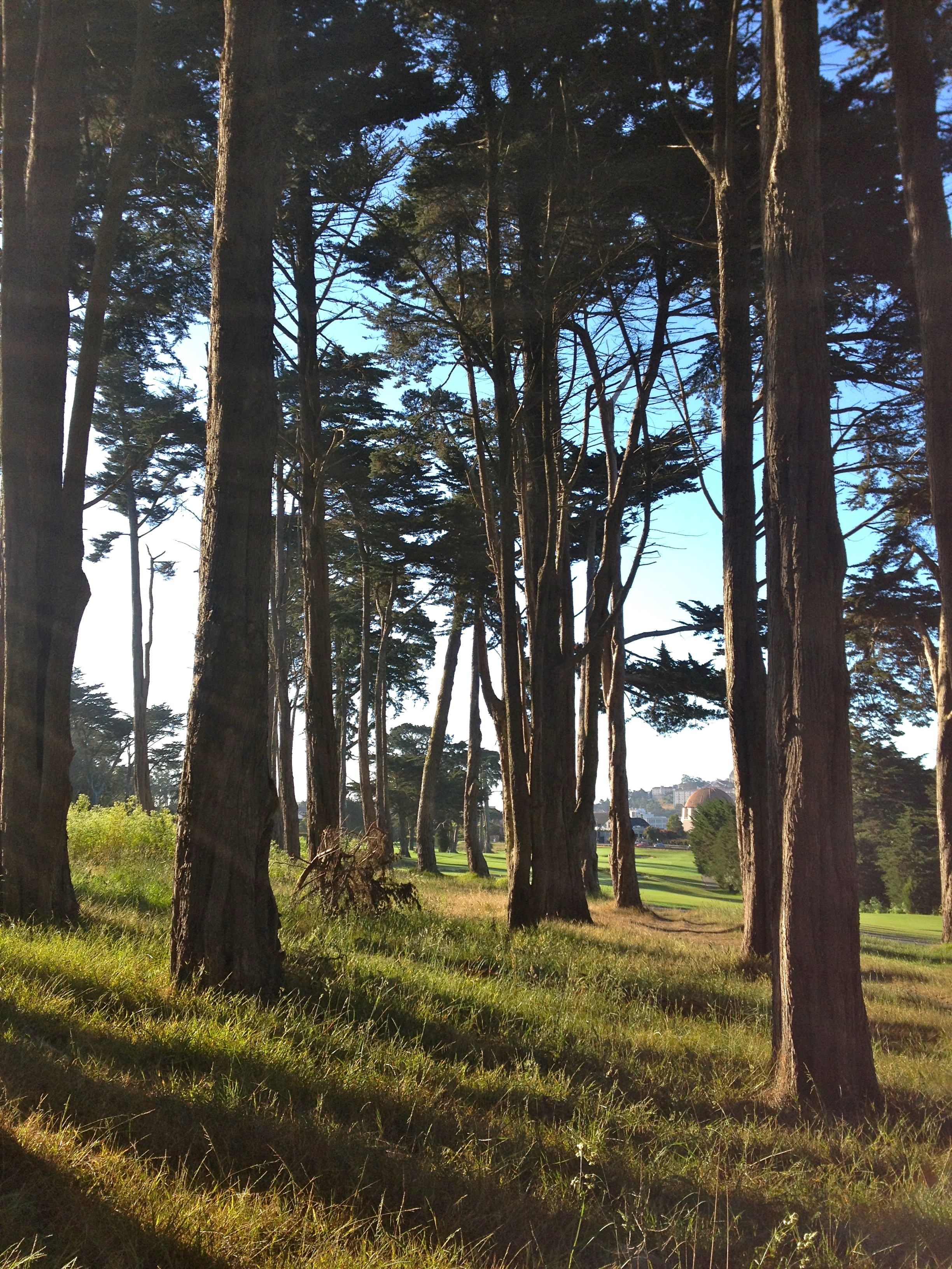 Early morning hike around the Presidio.