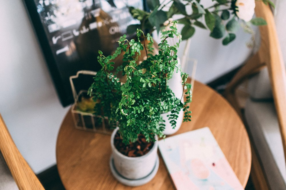 What's a house without house plants? You're right – no house at all! Bringing in some green guys can do wonders for your mood and your space. Not only does it improves air quality, but also brings some of the great outdoors in! Annnnd, especially if you have a pretty modern space, plants give the room a bit of playful personality.