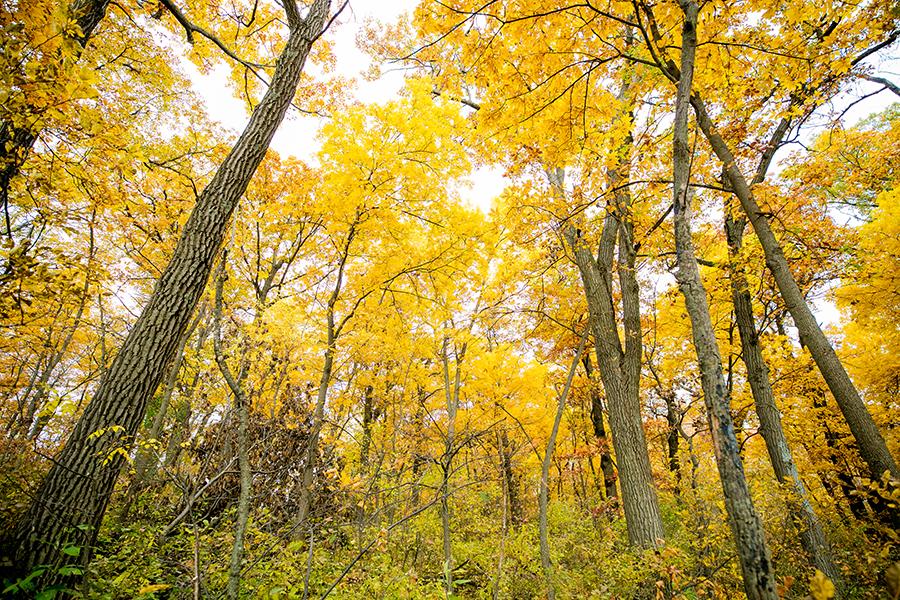 fall_art-5.jpg