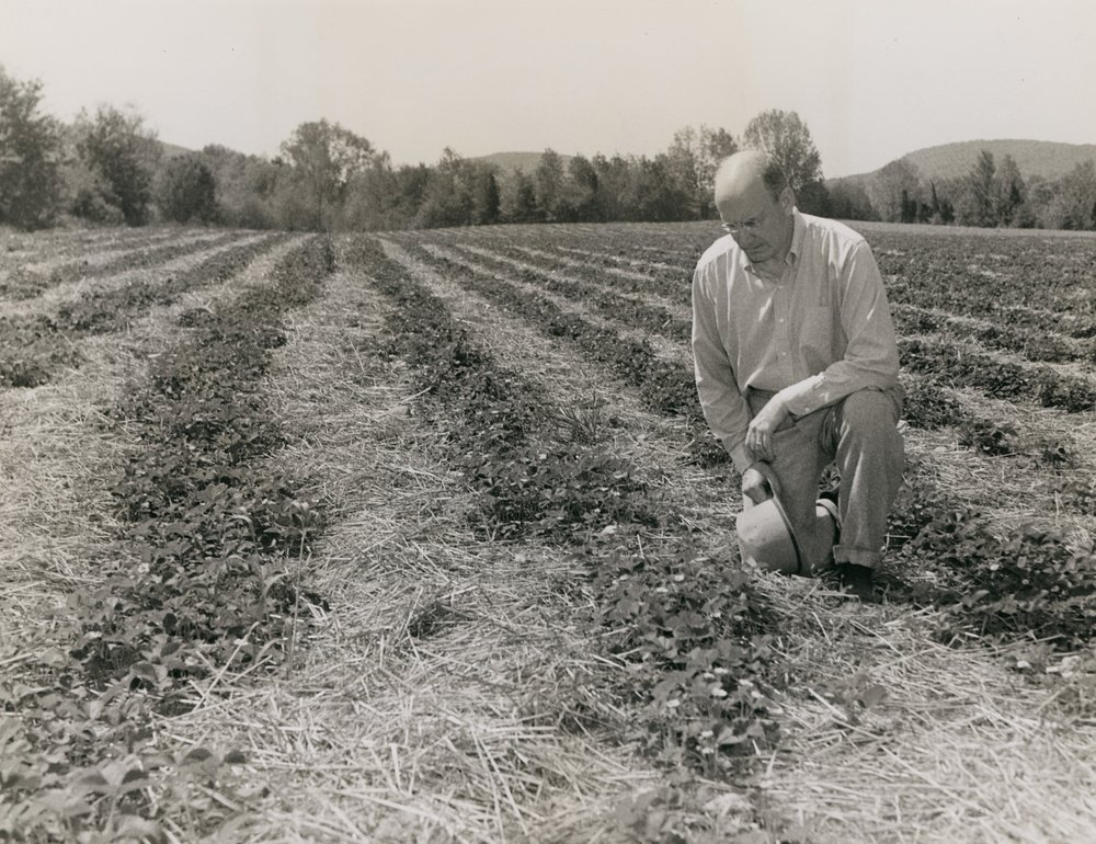 hmjr looking at veg. crop.jpg