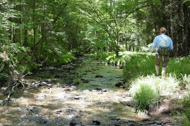 The Little Arnot is small, not much more than a trickle, but it is amazing where one can find PA brookies.