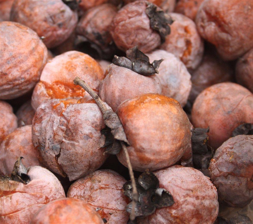 Diospyros virginiana  or American Persimmon