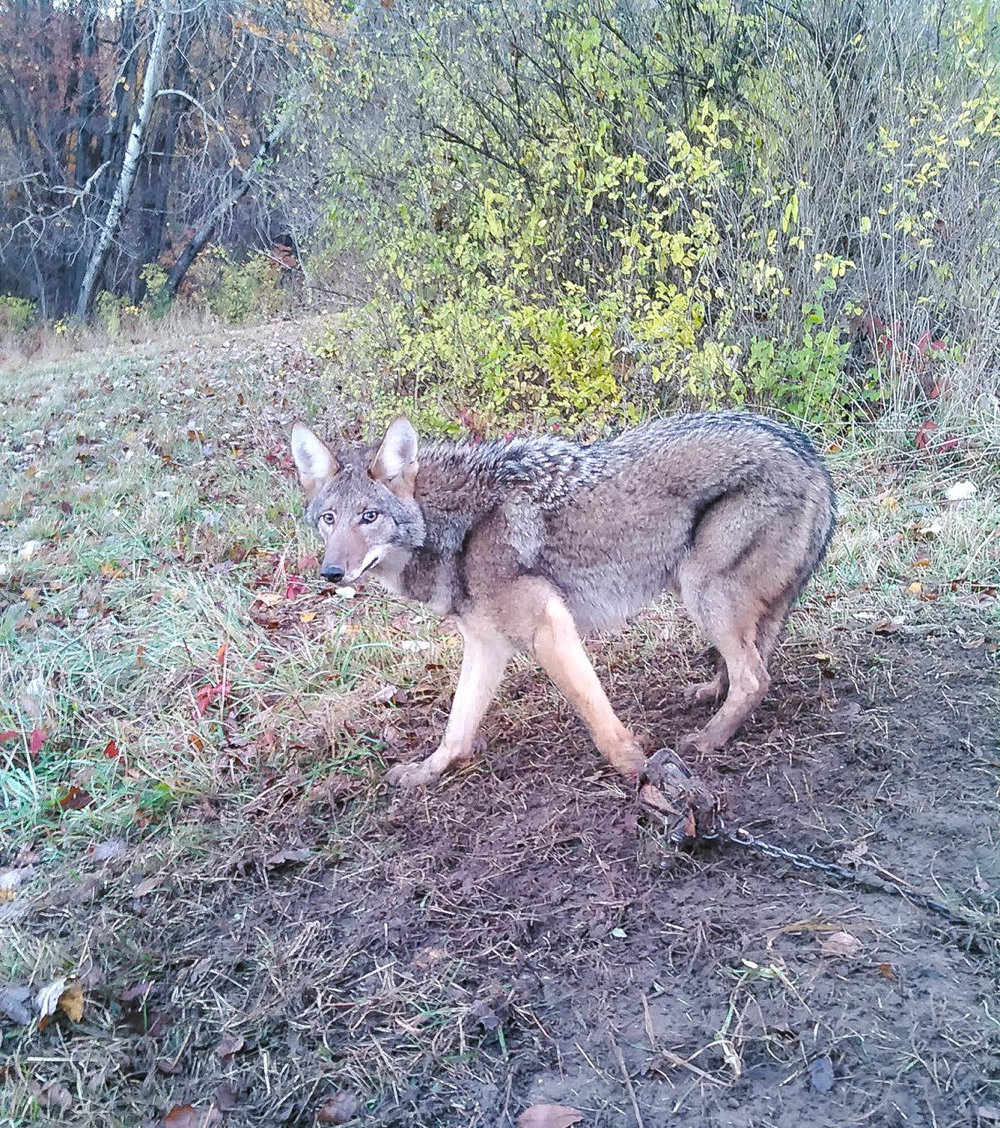 Probably my biggest yote of the season
