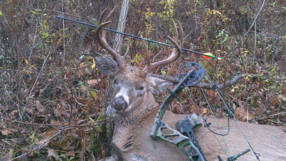 Whitetail Buck taken during archery season in PA