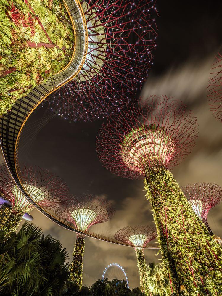 LDKphoto-SINGAPORE-SUPERTREE-012.jpg