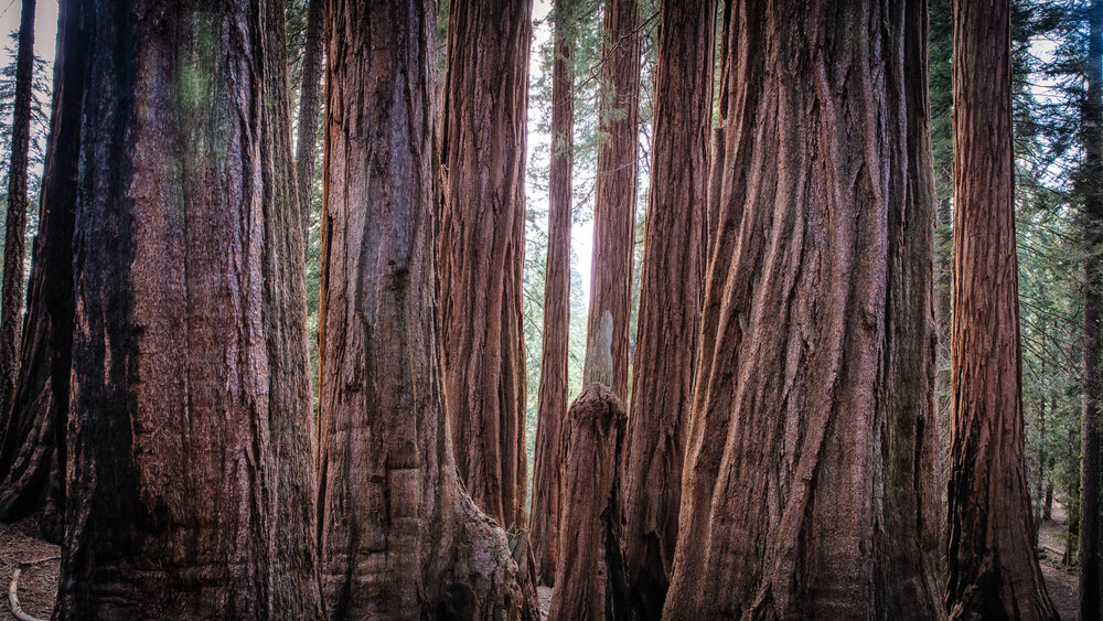 LDKphoto - Sequoia -3.jpg