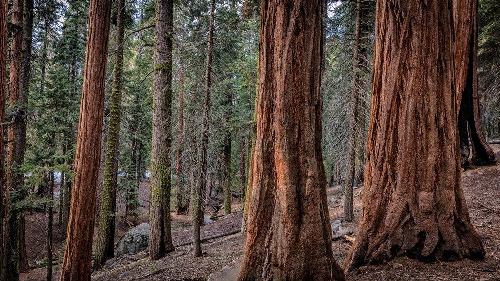 LDKphoto - Sequoia -4.jpg