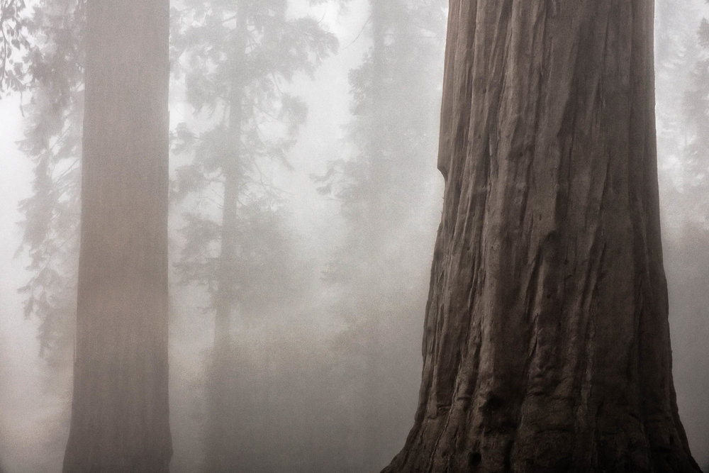 LDKphoto - Sequoia -10.jpg