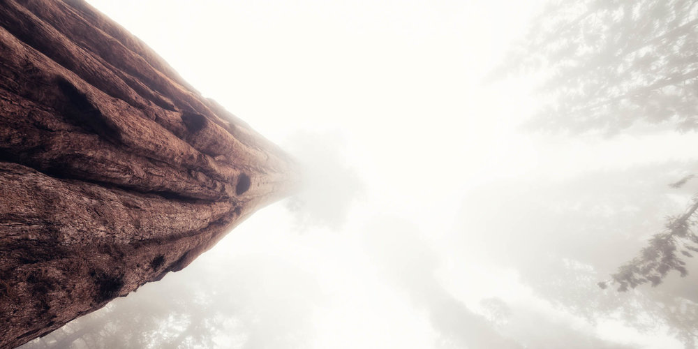LDKphoto - Sequoia -11.jpg