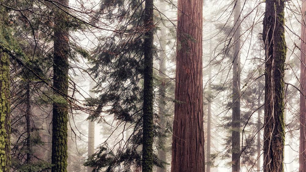 LDKphoto - Sequoia -13.jpg