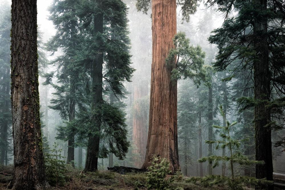 LDKphoto - Sequoia -16.jpg