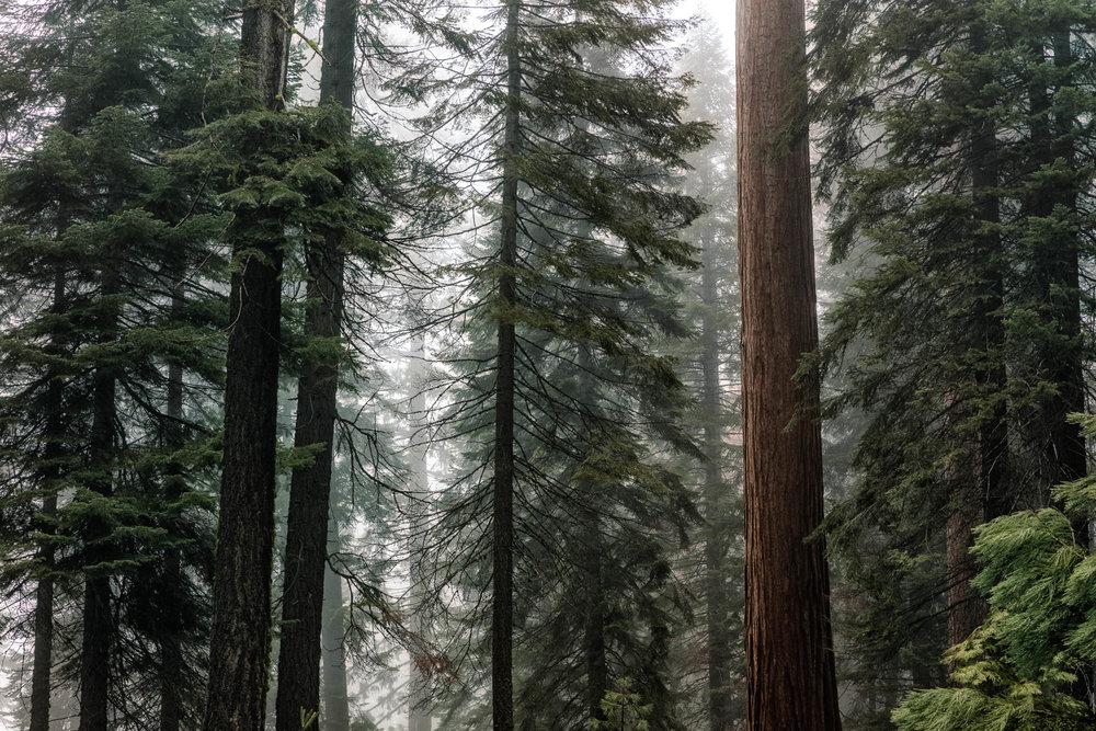 LDKphoto - Sequoia -15.jpg