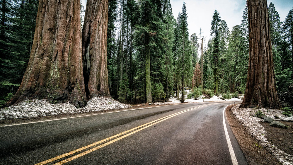 LDKphoto - Sequoia -17.jpg
