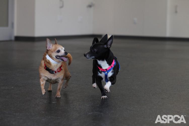 tiny dogs.jpg