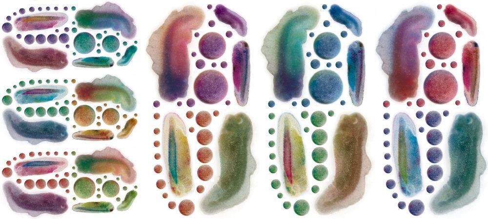tadpole pills.jpg