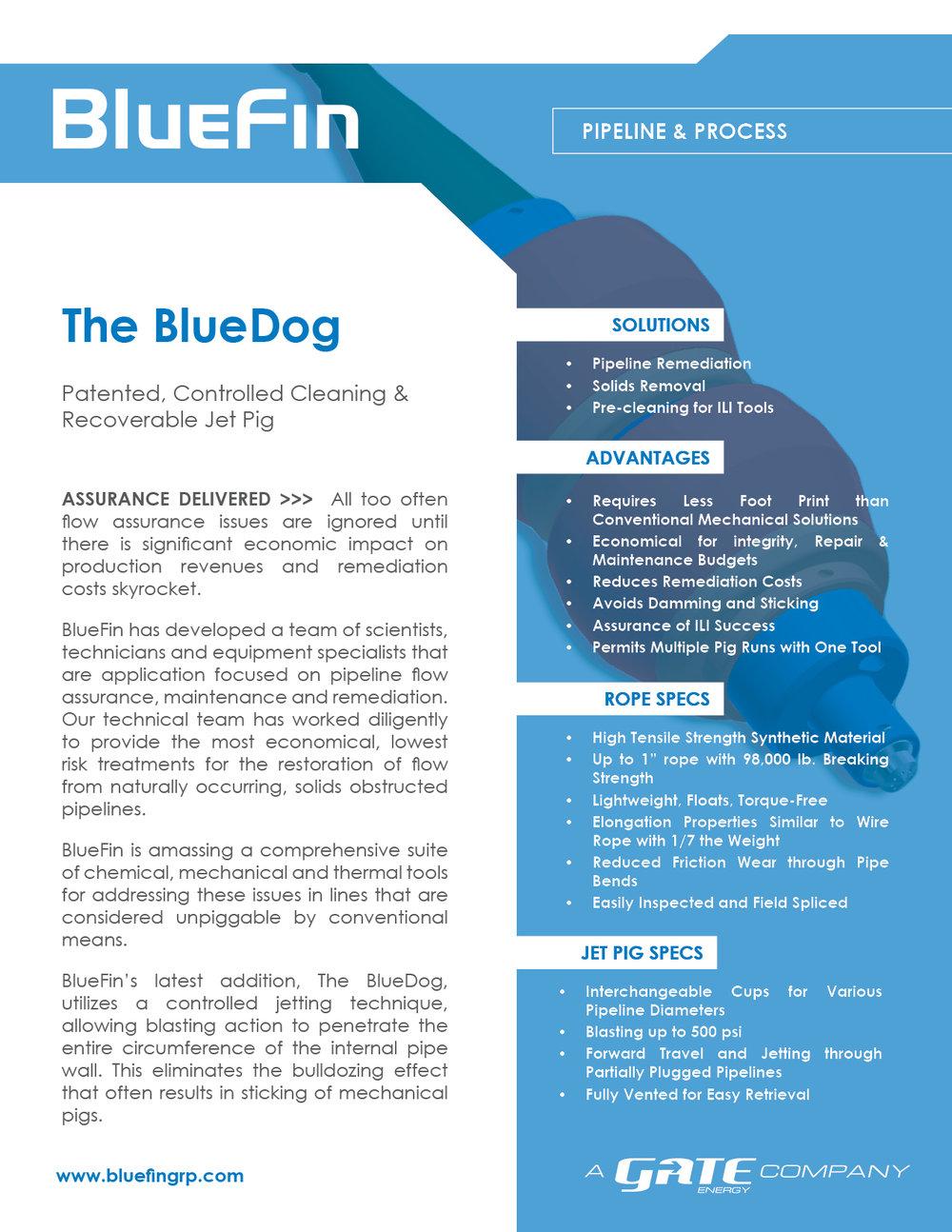 Brochure & Case Study PDFs — BlueFin