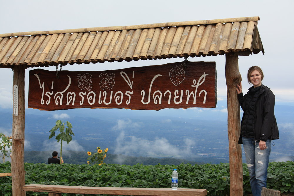 Mon Chaem strawberry fields, Chiang Mai, Thailand