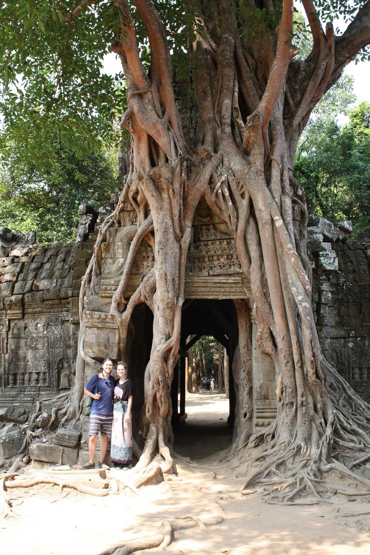 A tree grows at Ta Som