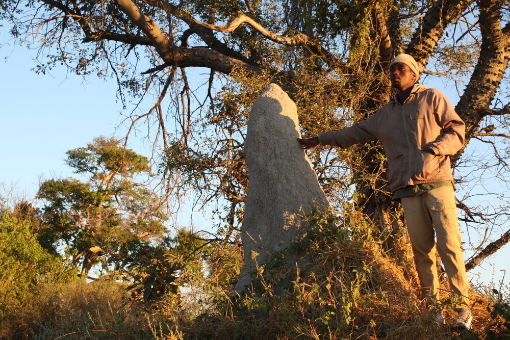 Large termite mounds seen all over Africa