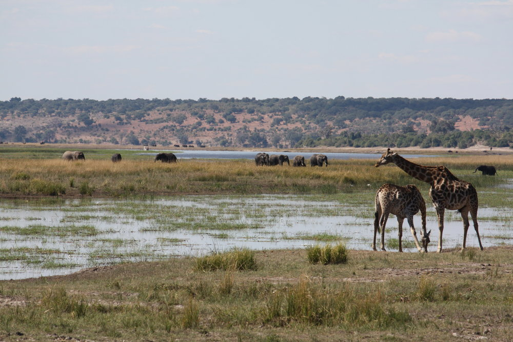 Typical busy scene around the Chobe River