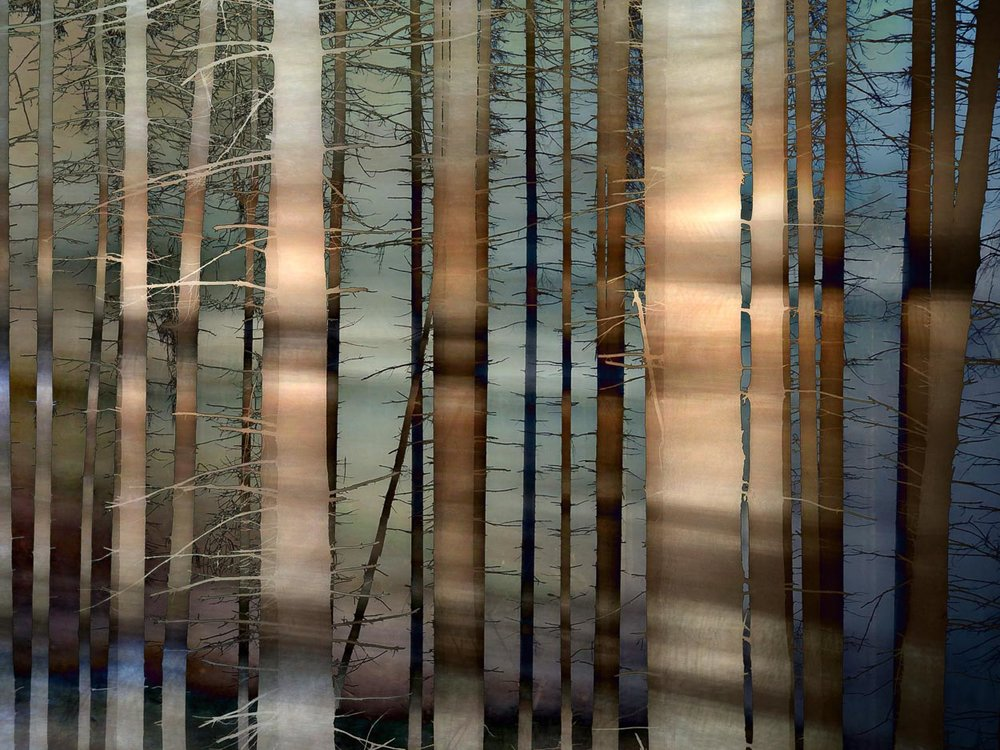 Moved by Trees (2018) - January – December 2018Bergisches Land, GermanySome iPhone impressions from my daily wanderings in the woods.
