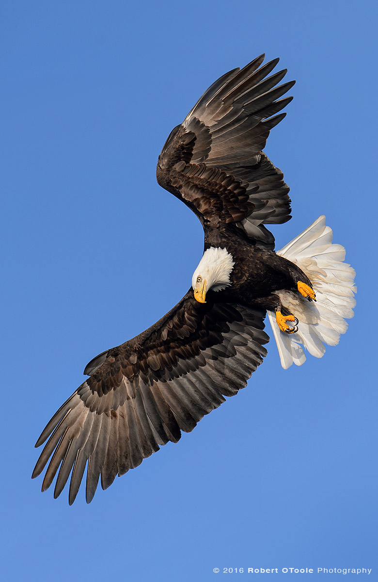 Eagle Pivot Apex Alaska