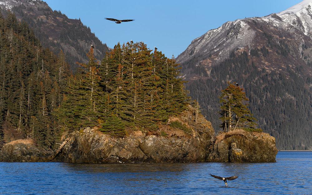 Alaska Eagle Cove