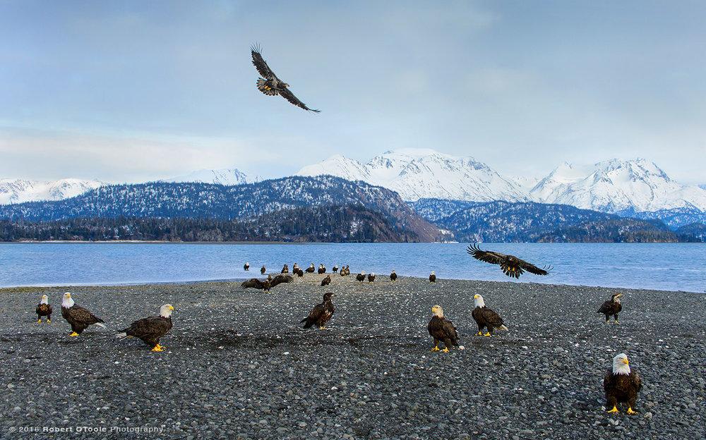 Eagle Gathering