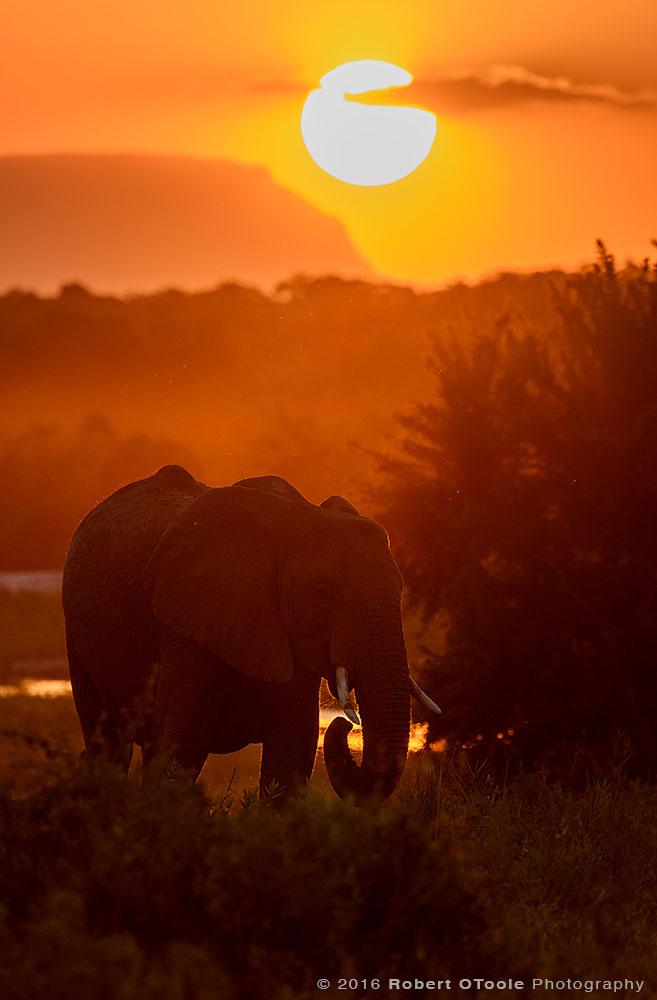 Elephant-sunset-vertical-Sabi-Sands-South-Africa-Robert-OToole-Photography