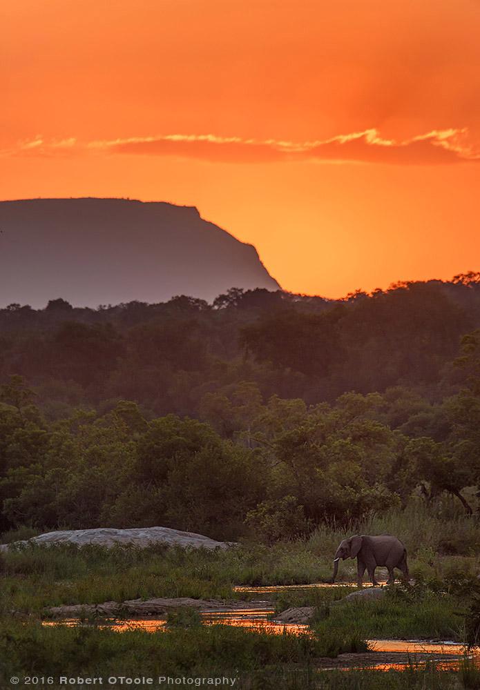 Elephant-sunset-Sabi-Sands-South-Africa-Robert-OToole-Photography