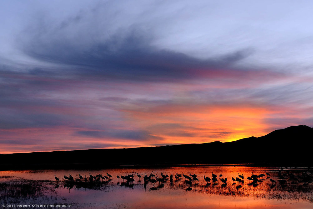 sandhill—cranes-and-sunrise-Robert-OToole-Photography